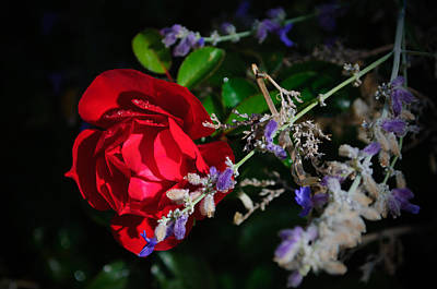 Photograph - Red And Purple by Tikvah's Hope