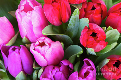 Photograph - Tulips Bloom by Anastasy Yarmolovich