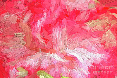 Photograph - Red And White Carnation Abstract by Sharon Talson
