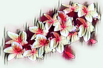 Photograph - Red And White Frangipani by Debra and Dave Vanderlaan