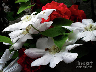 Photograph - Red And White by Jasna Dragun