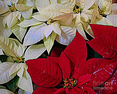 Photograph - Red And White Poinsettias Flowers Expressionist Effect by Rose Santuci-Sofranko