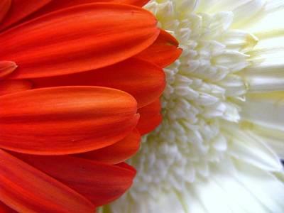 Photograph - Red And White by Rhonda Barrett