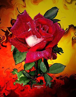 Digital Art - Red And White Rose Bloom by Artful Oasis