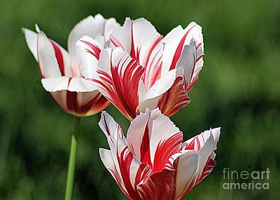 Red And White Stripes Art Print