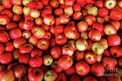 Photograph - Red And Yellow Apples by Paul Mashburn