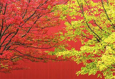 Photograph - Red And Yellow Autumn Foliage by Peter V Quenter