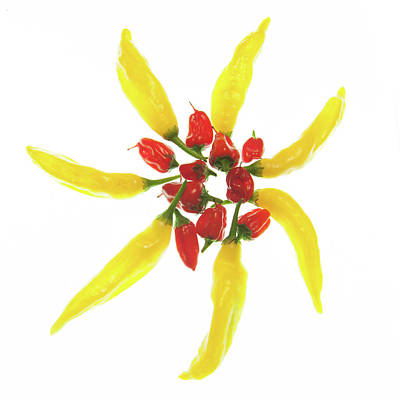 Chillie Photograph - Red And Yellow Chillie Star by Helen Northcott