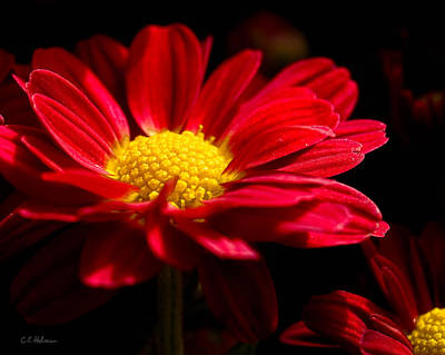 Photograph - Red And Yellow by Christopher Holmes
