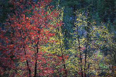 Red And Yellow Leaves Abstract Horizontal Number 1 Art Print by Heather Kirk