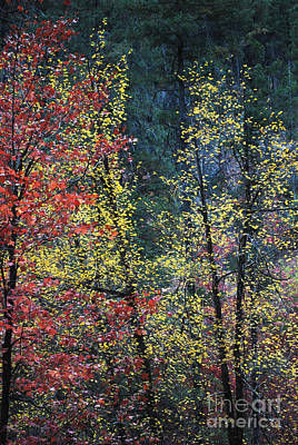 West Fork Photograph - Red And Yellow Leaves Abstract Vertical Number 2 by Heather Kirk