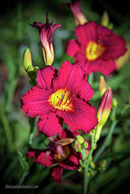 Photograph - Red And Yellow Lily  by LeeAnn McLaneGoetz McLaneGoetzStudioLLCcom