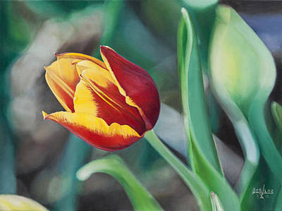 Red And Yellow Tulip Art Print by Joshua Martin
