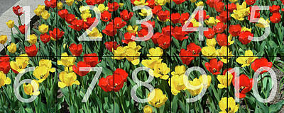 Photograph - Red And Yellow Tulips Panoramic Map by Michael Bessler