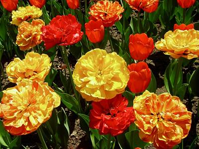 Photograph - Red And Yellow Tulips by Stephanie Moore