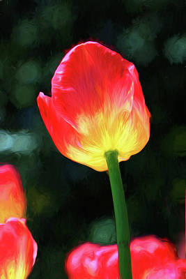 Photograph - Red And Yellow Tulip - Photopainting by Allen Beatty
