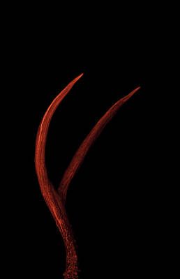 Abstract Photograph - Red Antler by Ami Poindexter