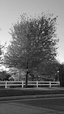 Photograph - Red Arbor Tree B W by Rob Hans