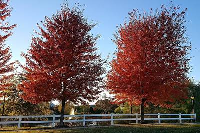 Photograph - Red Arbor Trees  by Rob Hans