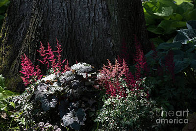 Photograph - Red Astilbes by David Bearden