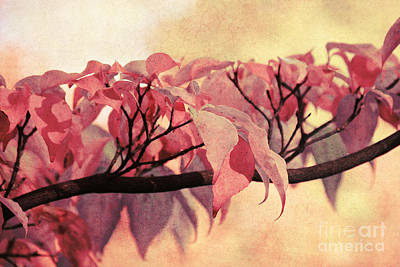 Red Autumn Day Art Print by Angela Doelling AD DESIGN Photo and PhotoArt