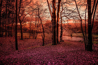 Herbstfarben Photograph - Red Autumn by Kai Jarchow