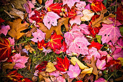 Photograph - Red Autumn Leaves by Colleen Kammerer