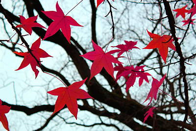 Photograph - Red Autumn Leaves by Elenarts - Elena Duvernay photo