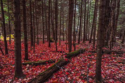 Photograph - Red Autumn Leaves On Ground  by Terry DeLuco