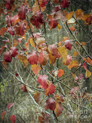 Photograph - Red Autumn Leaves by Tamara Becker