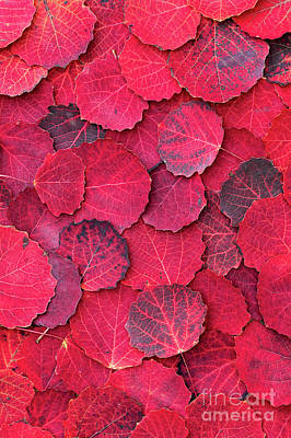 Photograph - Red Autumn by Tim Gainey