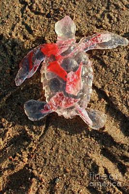Sculpture - Red Baby Sea Turtle From The Feral Plastic Series By Adam Long S by Adam Long