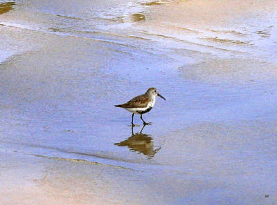 Photograph - Red-backed Sandpiper by Will Borden