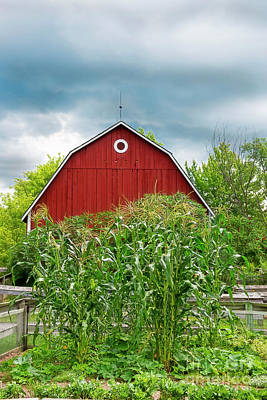 Photograph - Red Barn And Corn In Hills by David Arment