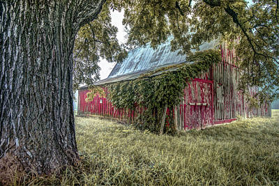 Photograph - Red Barn And Framing Tree by Gregory Ballos