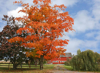 Photograph - Red Barn And Red Tree by Barbara  White