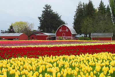 Photograph - Red Barn And Tulips by Karen Molenaar Terrell