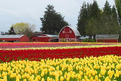 Photograph - Red Barn And Tulips by Karen Molenaar Terrell