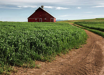 Photograph - Red Barn In Green Field by Bob Cournoyer
