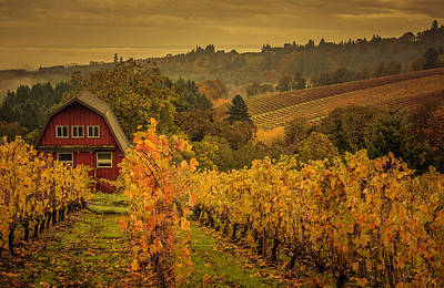 Photograph - Red Barn In The Vines by Don Schwartz