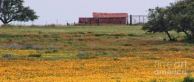 Photograph - Red Barn In Wildflowers by Toma Caul