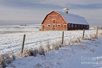 Photograph - Red Barn In Winter Coat by Dee Cresswell