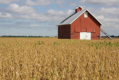 Photograph - Red Barn September Soy by Dylan Punke