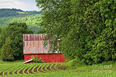 Photograph - Red Barn Summer Scenic by Alan L Graham
