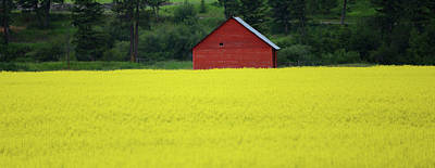 Photograph - Red Barn Yellow Canola by Whispering Peaks Photography