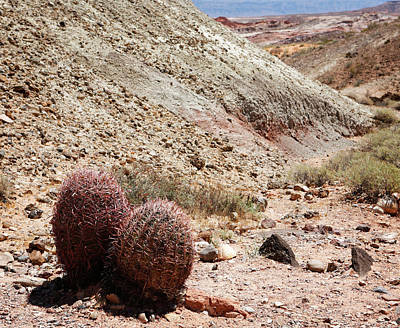 Photograph - Red Barrel Cactus by Marilyn Hunt