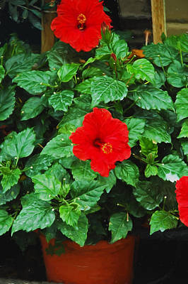 Photograph - Red Hibiscus Beauty by Allen Beatty
