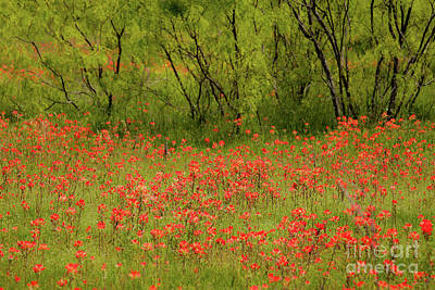 Photograph - Red Beauty by Iris Greenwell