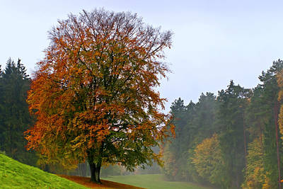 Herbstlaub Photograph - Red Beech At Hole 4 by Phobeke Photographie Bernd Keller