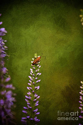 Still Live Photograph - Red Beetle On Purple Blazing Star by Mary Machare